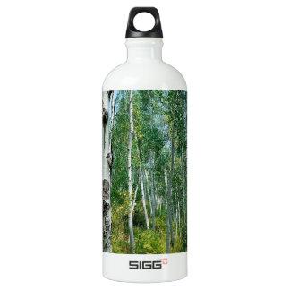 Tree Dreaming Of Birch Aluminum Water Bottle