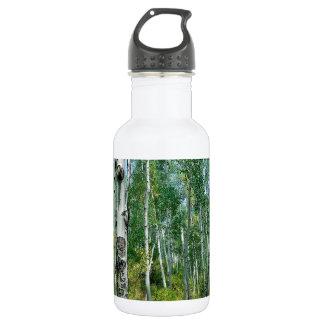 Tree Dreaming Of Birch Water Bottle