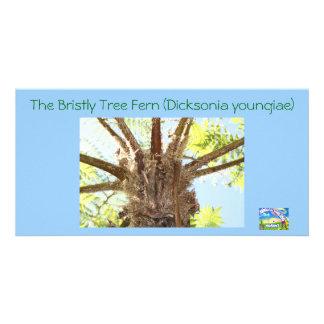 Tree Fern by Nimbin Online Market Personalized Photo Card
