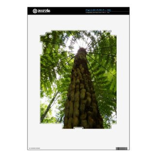 Tree Fern Decal For iPad 2