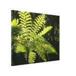 Tree Fern in the Rainforest Canvas Print