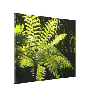 Tree Fern in the Rainforest Canvas Print