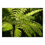 Tree Fern in the Rainforest Card