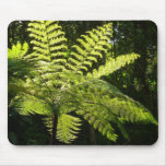 Tree Fern in the Rainforest Mouse Pad