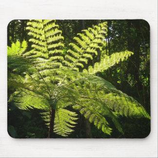 Tree Fern in the Rainforest Mousepad