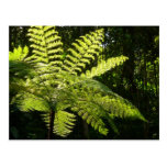 Tree Fern in the Rainforest Postcard