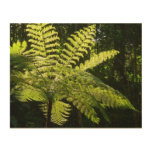 Tree Fern in the Rainforest Wood Wall Decor