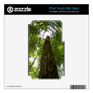 Tree Fern iPod Touch 4G Skin