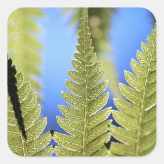 Tree fern leaf detail square sticker
