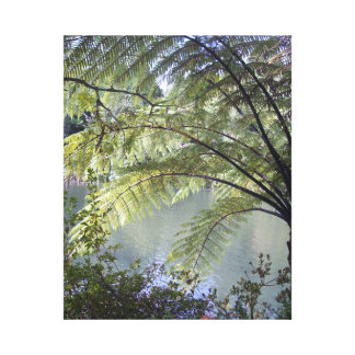 Tree fern over water canvas print