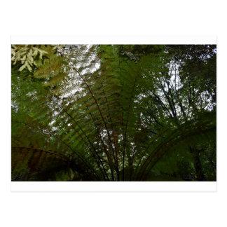 TREE FERN TARKINE NATIONAL PARK TASMANIA AUSTRALIA POSTCARD