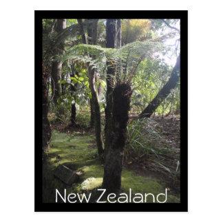 Tree ferns in New Zealand postcard