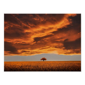tree field abstract art photography poster