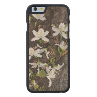 Tree Flowers Carved® Maple iPhone 6 Slim Case