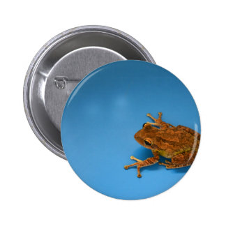 Tree frog against blue background on right pinback buttons