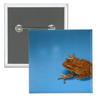 Tree frog against blue background on right pinback button