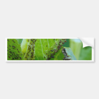 Tree Frog at Aphid Buffet Bumper Sticker