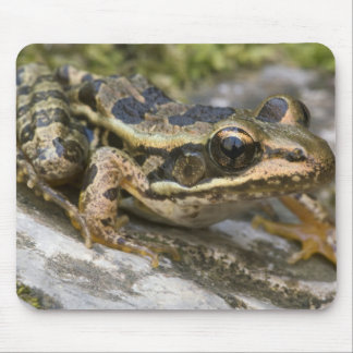 Tree frog at the entrance to small cave, mouse pads