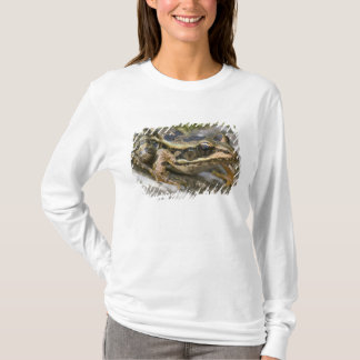 Tree frog at the entrance to small cave, T-Shirt