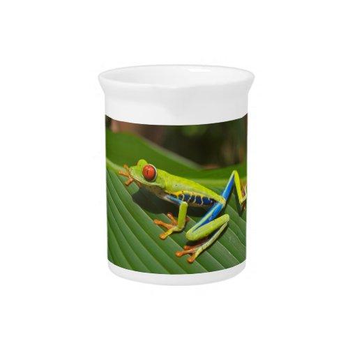 Tree Frog Beverage Pitchers