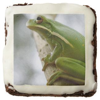 Tree Frog Brownie