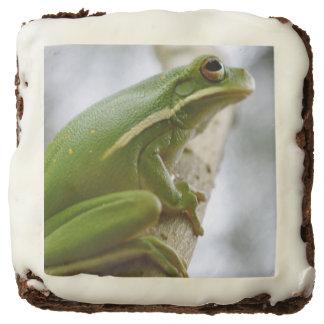 Tree Frog Brownie 2