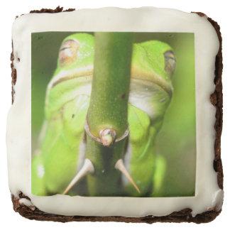 Tree Frog Brownie 3