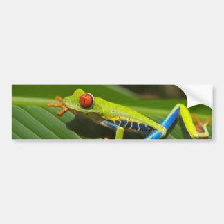 Tree Frog Bumper Sticker