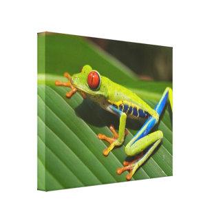 Tree frog canvas print