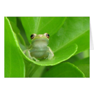 Tree Frog Card