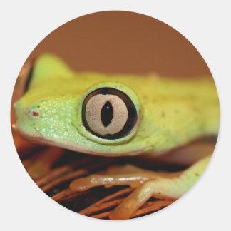 tree frog classic round sticker