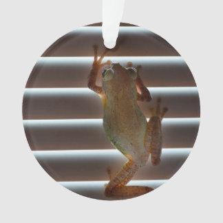 tree frog climbing blinds neat animal photo