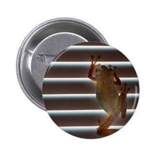 tree frog climbing blinds neat animal photo pins
