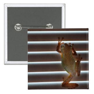 tree frog climbing blinds neat animal photo pin