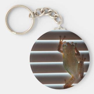 tree frog climbing blinds neat animal photo keychain