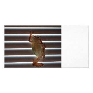 tree frog climbing blinds neat animal photo photo card