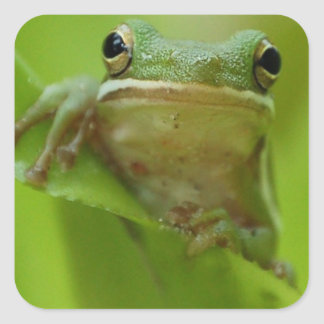 Tree Frog Green Customize jump Square Sticker