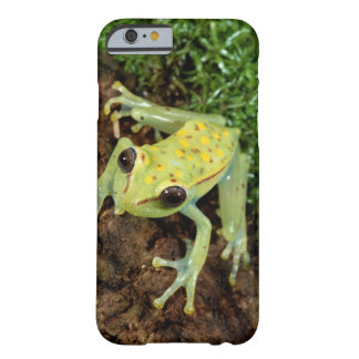 Tree Frog (Hylidae) Barely There iPhone 6 Case