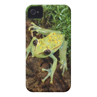 Tree Frog (Hylidae) iPhone 4 Cover