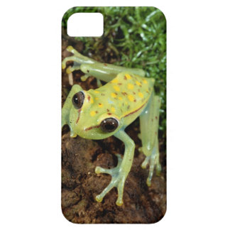 Tree Frog (Hylidae) iPhone SE/5/5s Case