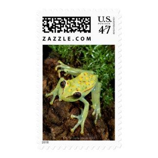 Tree Frog (Hylidae) Postage