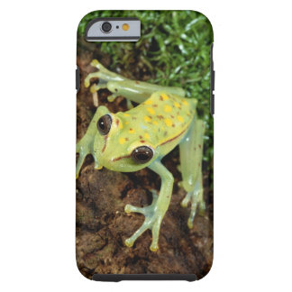 Tree Frog (Hylidae) Tough iPhone 6 Case