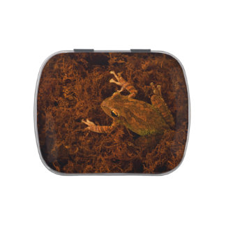 tree frog in moss animal design candy tin
