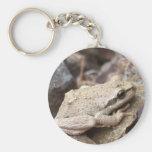 Tree Frog Key Chains