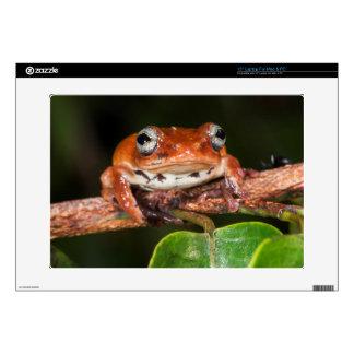 """Tree frog, Lango Bai, Congo 15"""" Laptop Skins"""