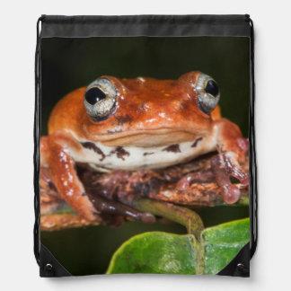 Tree frog, Lango Bai, Congo Drawstring Bag