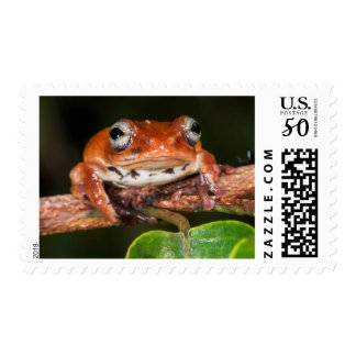 Tree frog, Lango Bai, Congo Postage