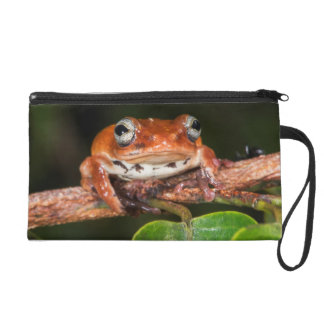 Tree frog, Lango Bai, Congo Wristlet