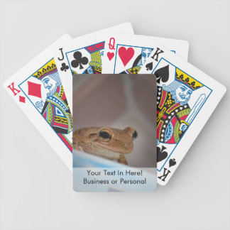 tree frog looking at viewer on blue bicycle playing cards