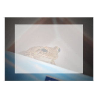 tree frog looking at viewer on blue cards